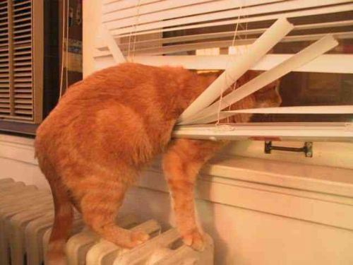 cat-in-blinds