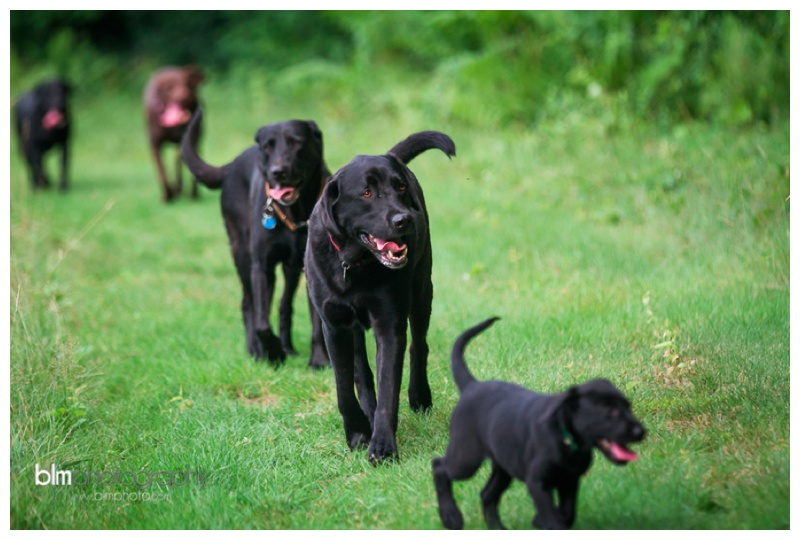 Webber-Puppies_072115-4106.jpg