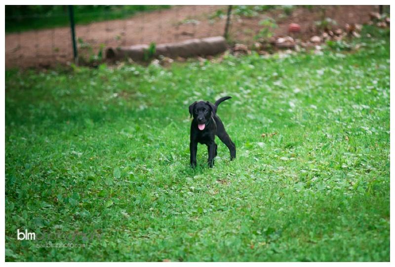 Webber-Puppies_072115-4252.jpg