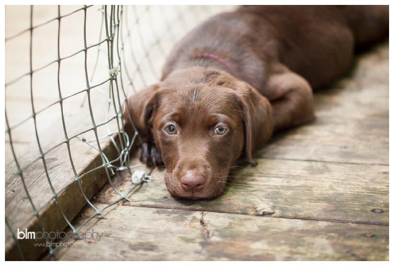 Webber-Puppies_072115-8389.jpg