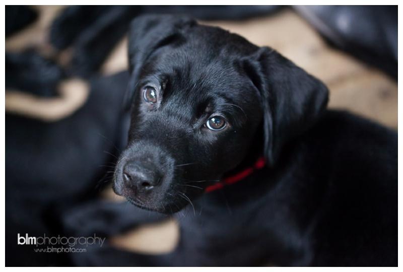 Webber-Puppies_072115-8475.jpg