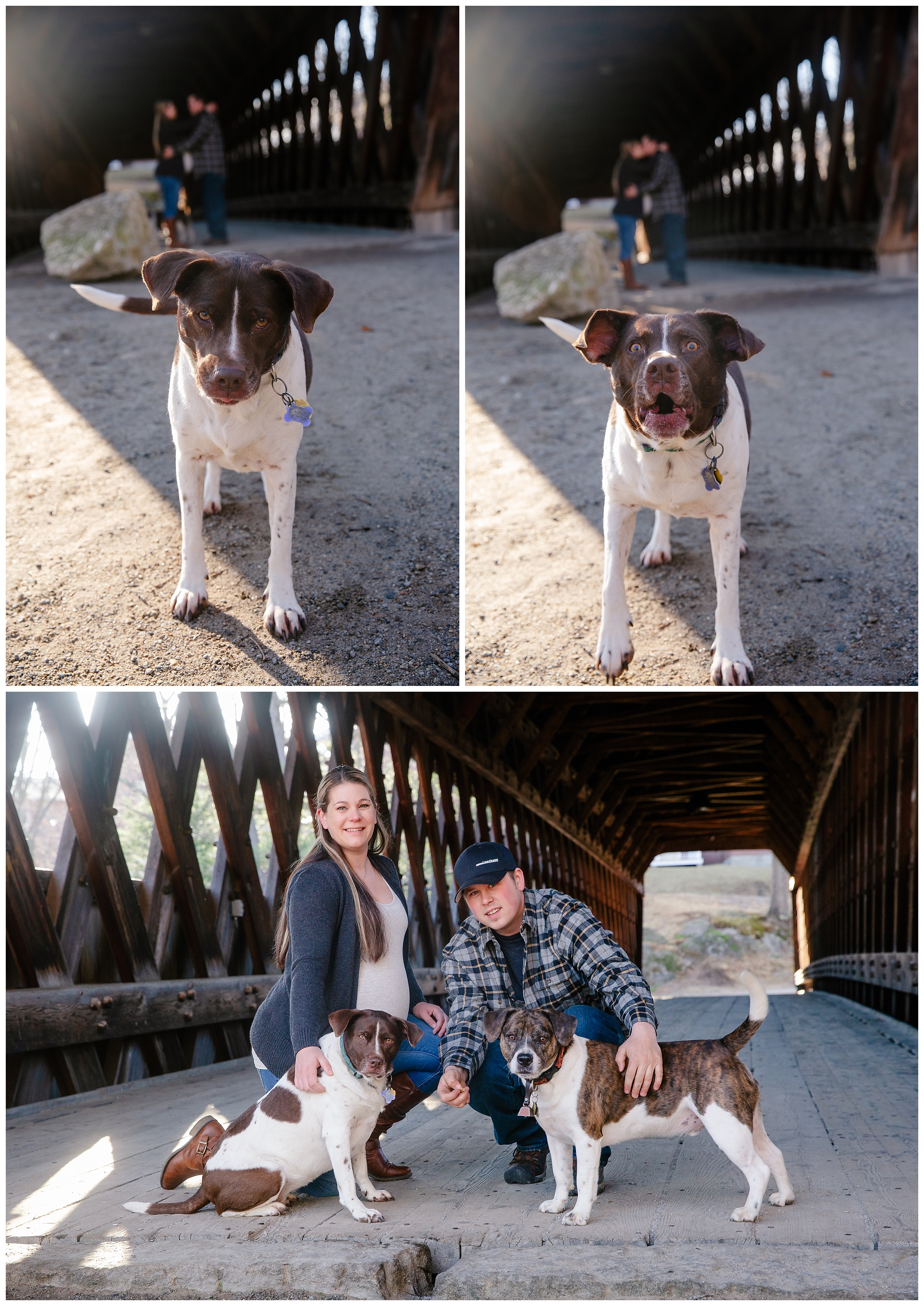 Apr,April,BLM,Ben Mailhot,Brianna Morrissey,Brie Morrissey,Covered Bridge,Dog,Kaylea Brandl,Kaylea-Ben_Maternity,Maternity,Pet Maternity,Photo,Photographer,Photography,www.blmphoto.com/contact,©BLM Photography 2019,