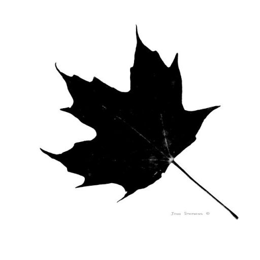cropped-black-on-white-maple-leaf-john-stephens.jpg