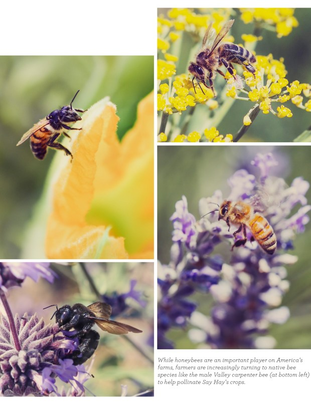 061716_BeePollination_Blog_V01_12 (1)
