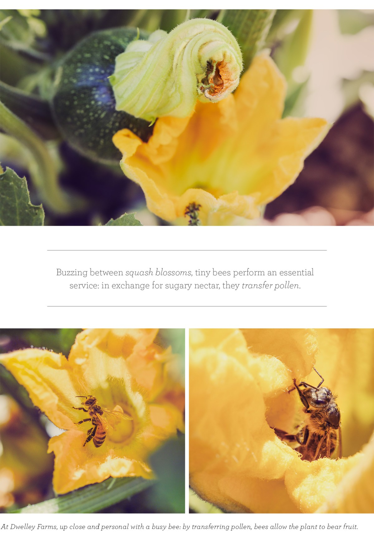 061716_BeePollination_Blog_V01_04