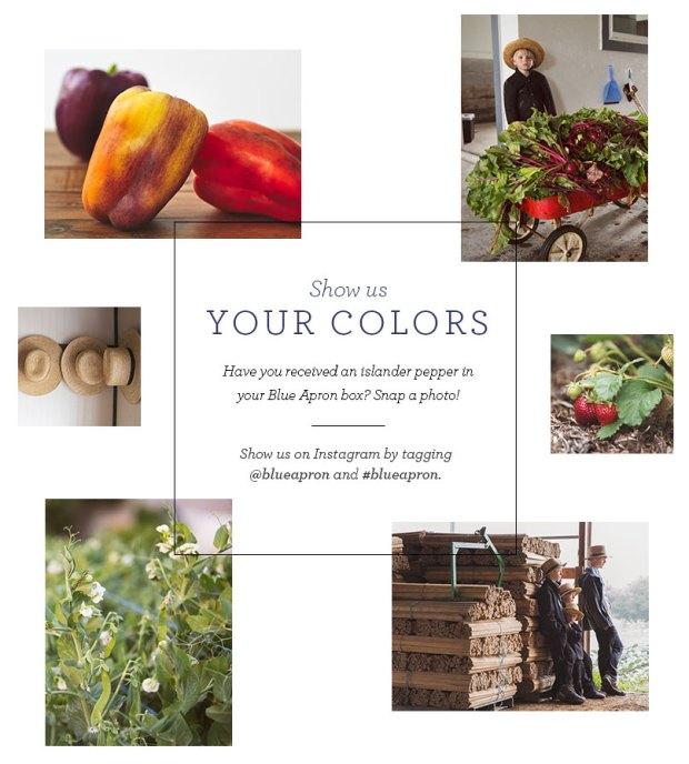 Blue Apron Purple Bell Pepper Instagram