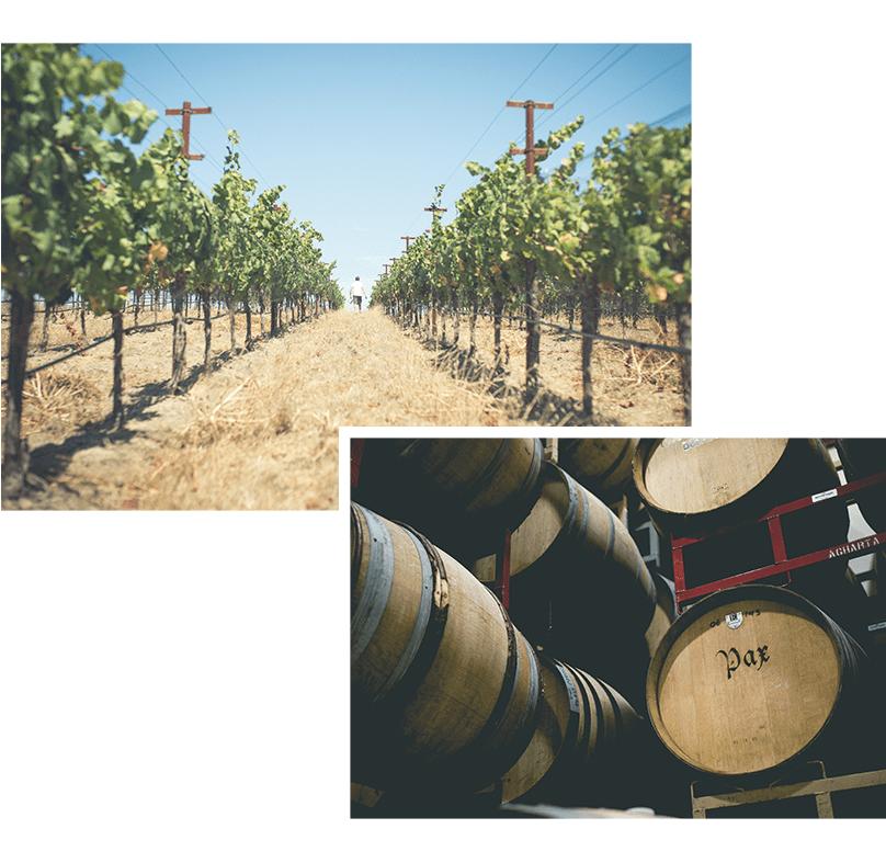 June-Wine-Blog-Slice_06