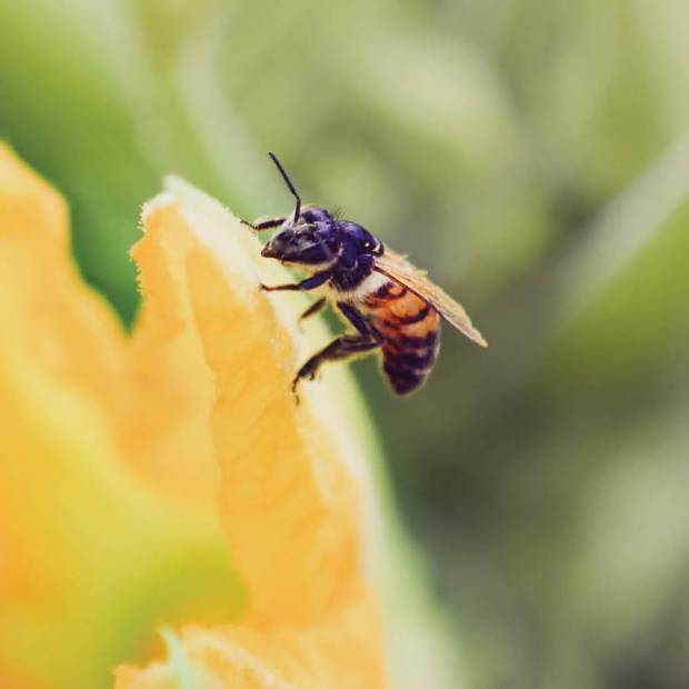Pollination_Blog_1
