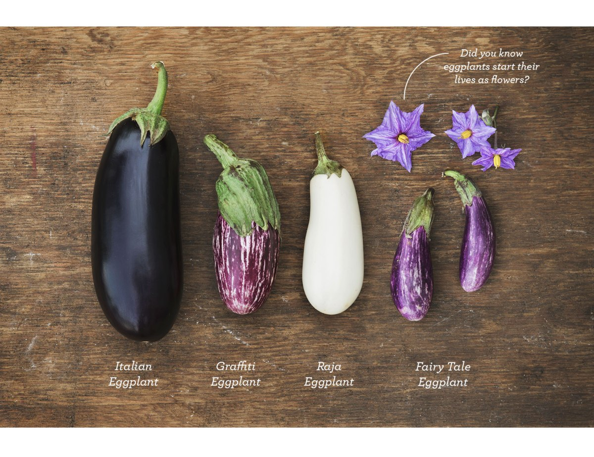 Fairytale-Eggplant-Slices_2
