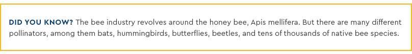 Pollination_Blog_6