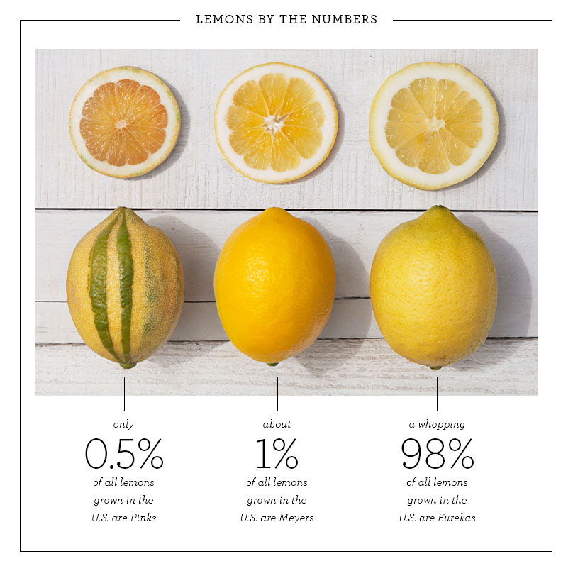 Pink lemons - infographic - meyer and eureka - variety
