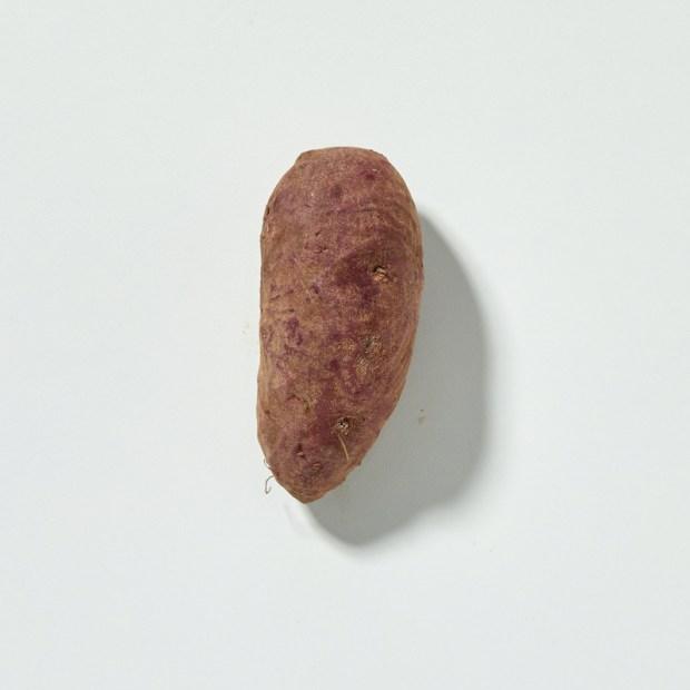 japanese sweet potato