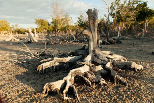 Deforestation is destroying lemur habitats | Photo: Garth Cripps