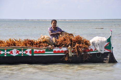 Seaweed aquaculture | Photo: Anouk Neuhaus