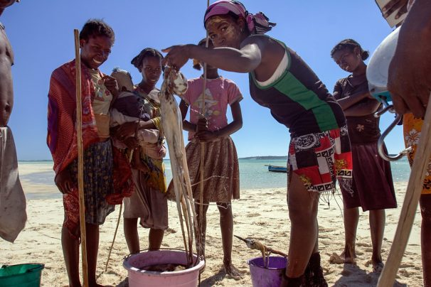 BV's holistic and integrated approach includes fisheries management | Photo: Garth Cripps