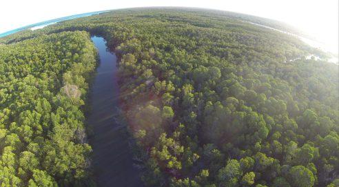 Programme Integration: Blue forests | Photo: Gabriel Diamond