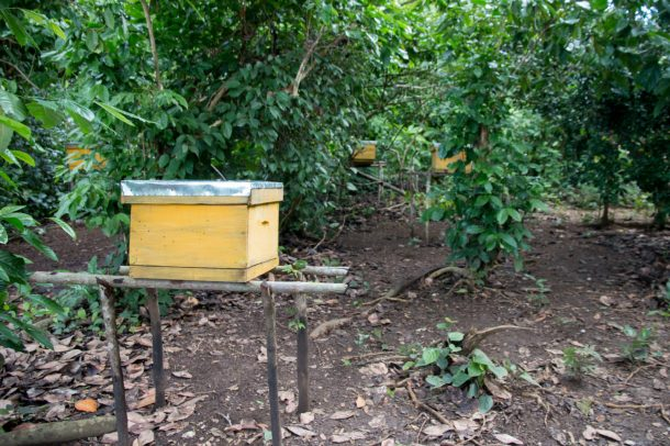 The Ankingabe hives