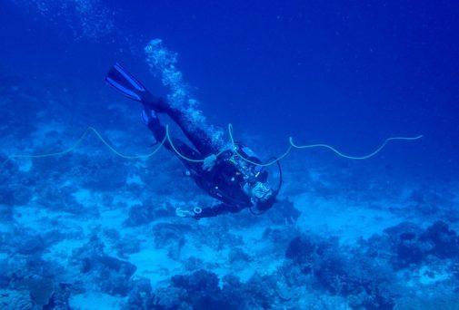 The magnificent gorgonian sea whip | Photo: Sassa Jordan