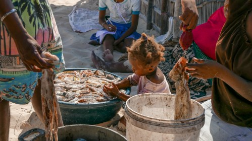 Entire families get involved in the octopus fishery data collection | Photo: Jagoda Zaczynska