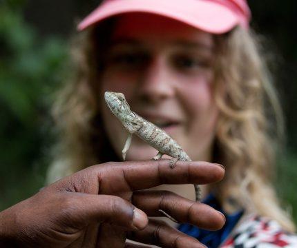 Chameleon | Photo: Ben Honey