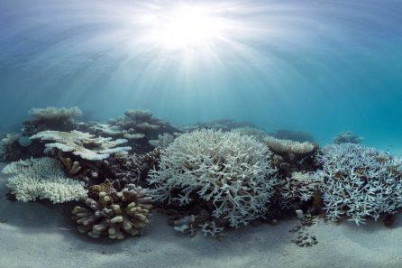 Bleaching: The Ocean Agency / XLCSS
