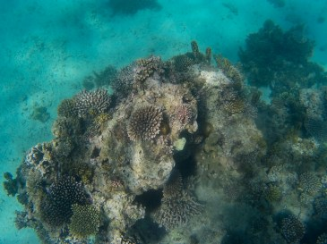 Reaching the coral reef   Photo: Hina Morjaria