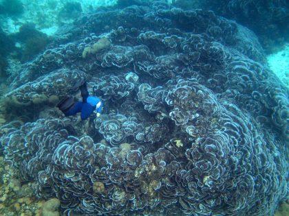 Incredible coral near Ataúro Island, Timor-Leste   Photo: Jen Craighill