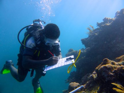 Get involved in marine research!