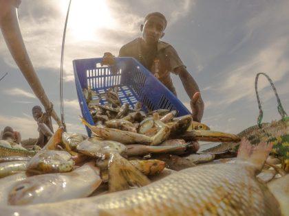 A fish buyer unloading fish catch into a basket in Pate Island. © Mwangi Kirubi / TNC
