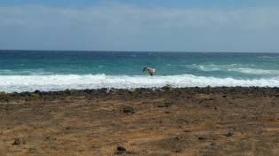 Fuertaventura - rowerowy dzien 12
