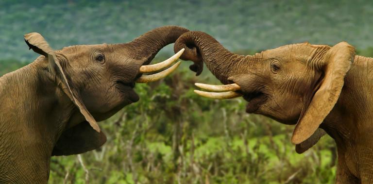 3019618-poster-1280-elephants