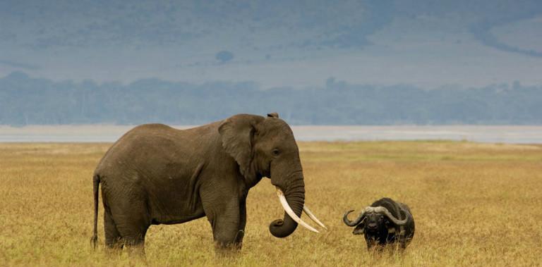 ngorongoro_conservation_area_019