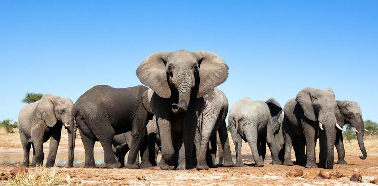 nws-st-zimbabwe-elephant-herd