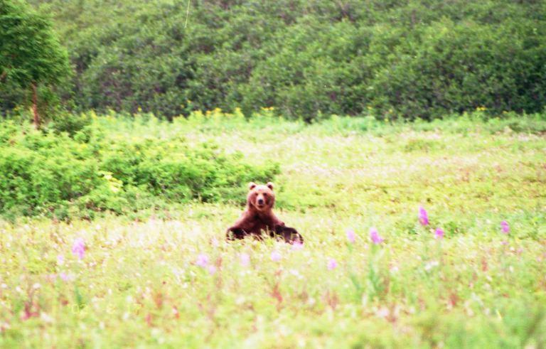 byh-bear-inthefield