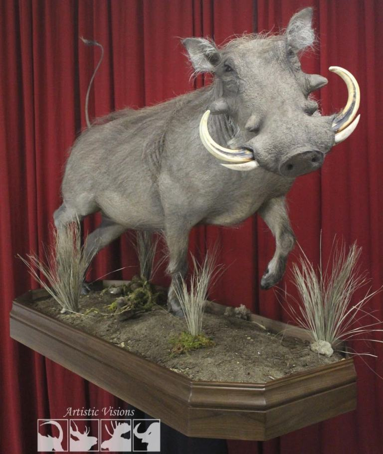 A realistic looking warthog mount