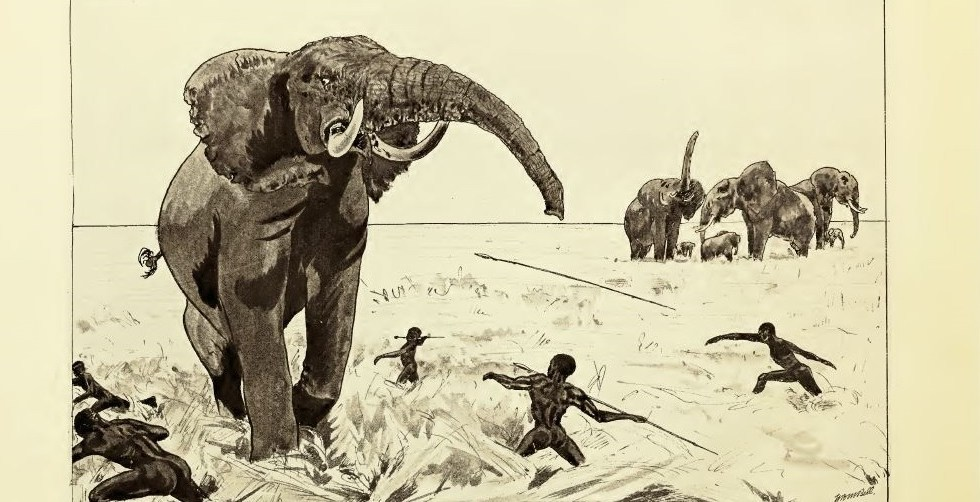 bell native attack elephant