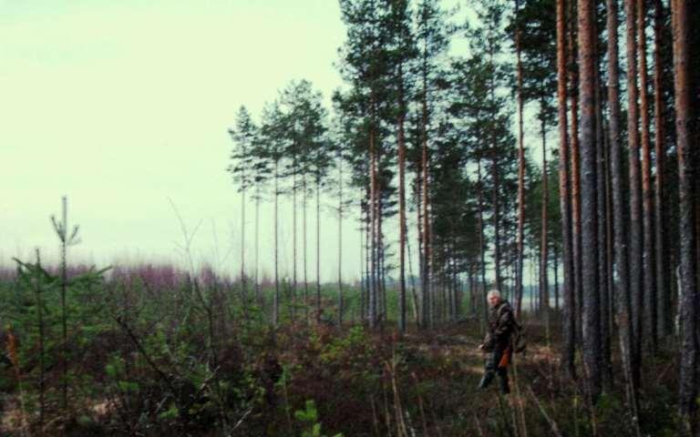 capercaillie habitat stalk