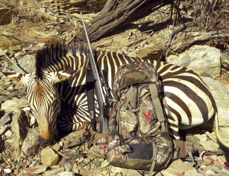 A mountain zebra taken in Namibia