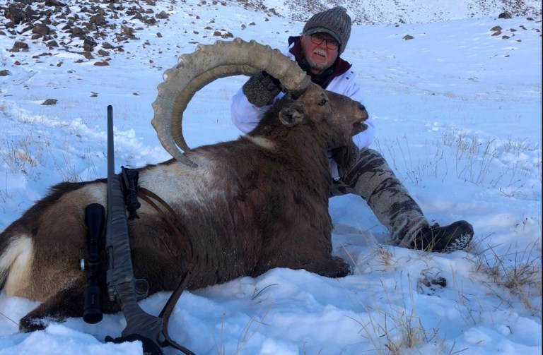 An ibex trophy harvested by an American hunter in Tajikistan