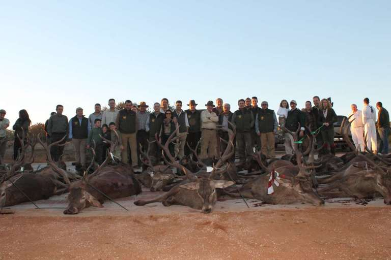 A layout of trophies after a Monteria hunt in Spain