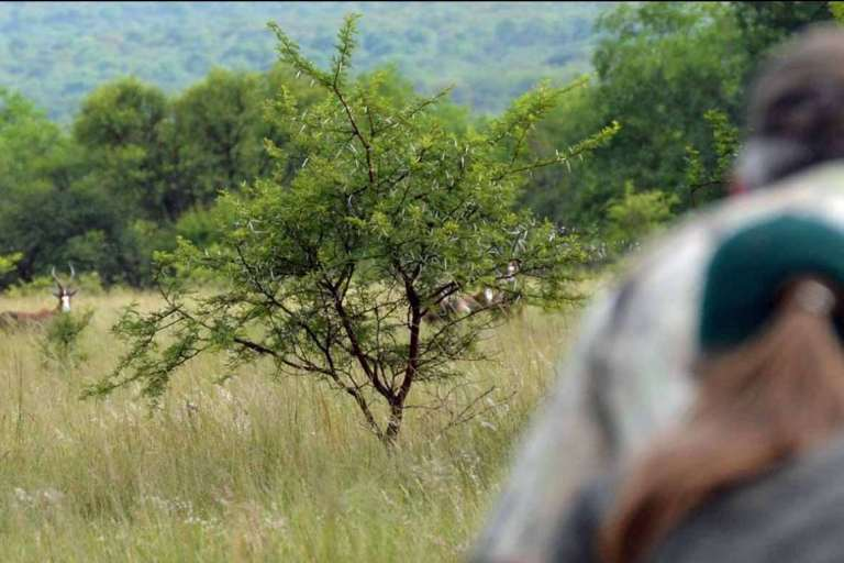 spot-and-stalk hunt for blesbuck