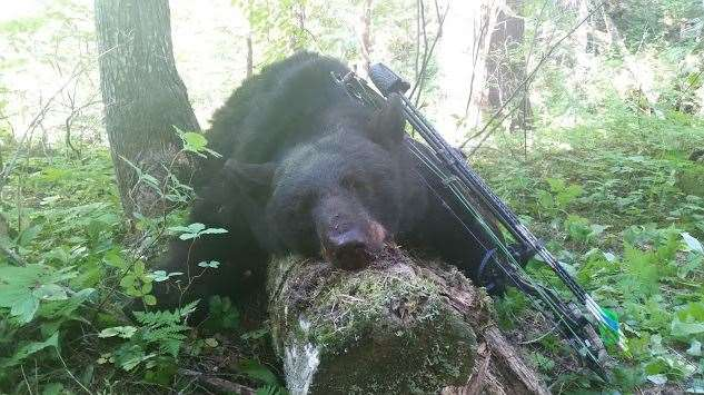 A black bear taken with a bow