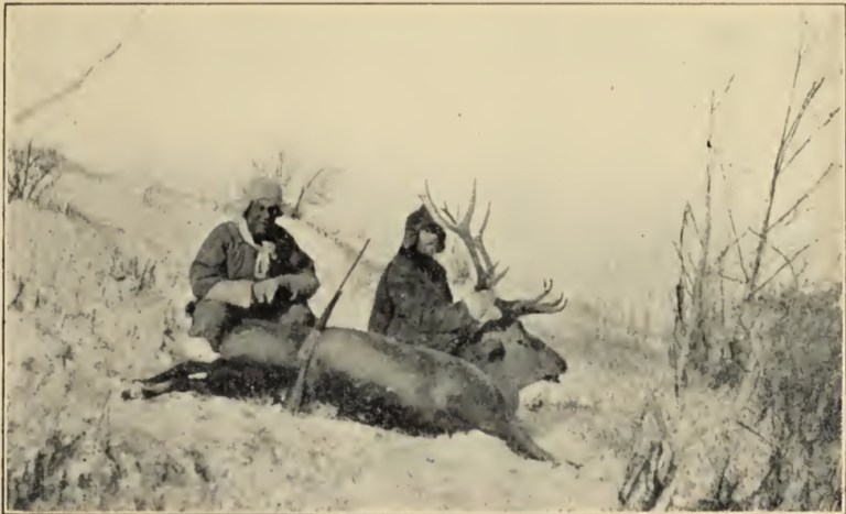The wapiti trophy from Northern China