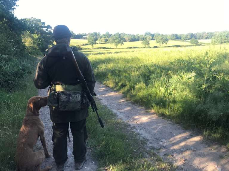 A hunter with a dog still-hunting for roe deer
