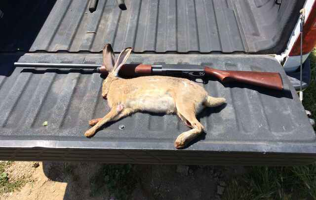 blog_california_rabbit