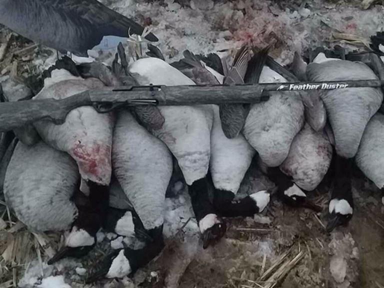 Canada geese and shotgun
