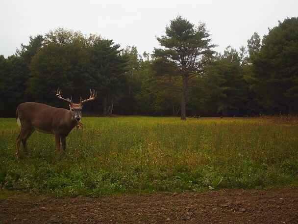 maine deer trail cam.jpg