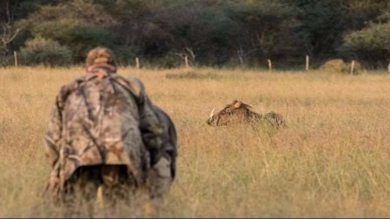 a hunter stalking a warthog