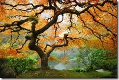 portland-japanese-gardens