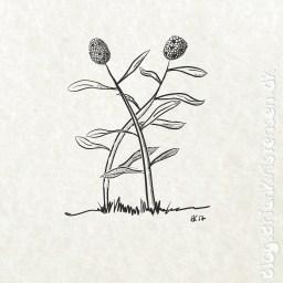 Sketch 0191